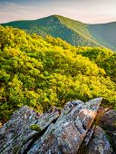 Evening View Of Hawksbill Mountain, From Betty's Rock In Shenandoah National Park, Virginia.