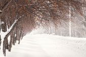Beautiful Snowy Winter Landscape With Path Way