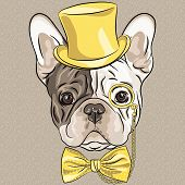 stock photo of bulldog  - hipster dog French Bulldog breed in a gold hat glasses and bow tie - JPG
