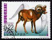 Postage Stamp Bulgaria 2000 Mountain Sheep, Wild Sheep