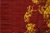 stock photo of vishu  - Golden shower tree blossom on red natural textured background with text space - JPG