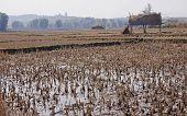 Rice Fields In The Vicinity Phonsavan