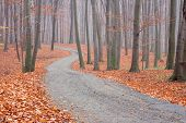 Beech Forest Path