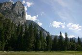 Yosemite Meadow View