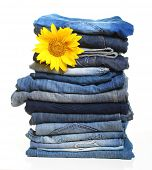 Pile of blue jeans and sunflower isolated on white.