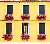 Six windows with geranium