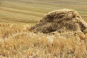 stock photo of harvest  - Haystacks in wheat field after harvest close up - JPG