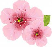 Illustration of cherry blossom flowers for your design needed. Raster version.