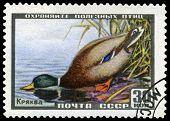 Vintage  Postage Stamp. Mallard.