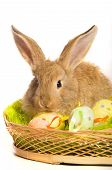 picture of easter eggs bunny  - Easter bunny with basket and colored eggs - JPG