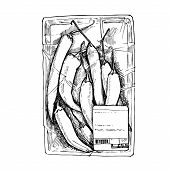 Vector Hand Drawn Illustration -  Packing Hot Chili Peppers. Isolated On White.