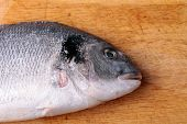 Uncooked Fish Dorado On Wood Background