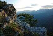 Morning Mountain With Pine And Rocks