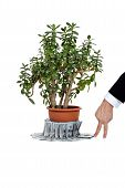 Crassula ovata or jade plant with money and human hand
