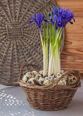 Irises In A Basket And Quail Eggs On The Window