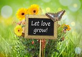 An image of a little chalkboard in the garden with the message Let love grow