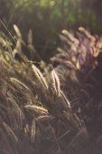 Daisy Against Vivid Green Grass