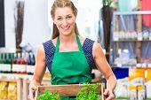 Organic Supermarket shop assistant filling up herbs storage racks in vegetable department