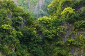 stock photo of rainforest  - Rainforest on rocky cliff in the Halong bay - JPG