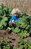 picture of strawberry blonde  - Blonde haired boy digging in the garden on sunny day - JPG