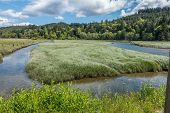 stock photo of grassland  - The Tuhuya River in Wahsington State forks around verdant grassland - JPG