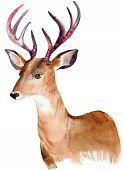 stock photo of deer horn  - portrait of a deer - JPG