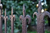 stock photo of wrought iron  - Detail of a wrought iron fence on garden background - JPG