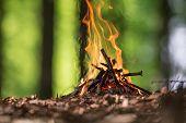 picture of bonfire  - Bonfire in spring forest - JPG