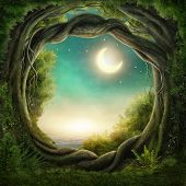 picture of moonlight  - Enchanted dark forest in the moonlight - JPG