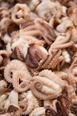 picture of octopus  - A Boiled octopus in the bowl background - JPG