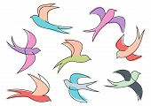 stock photo of swallow  - Graceful colorful flying swallow birds looping through the air - JPG
