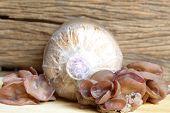 foto of mushroom  - ear mushroom and saw dust bag agriculture of mushroom cultivate - JPG