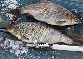 picture of caught  - Freshly caught fish on a wooden table and a knife for cleaning of scales - JPG