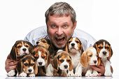 pic of puppy beagle  - The happy man and big group of a beagle puppies on white background - JPG