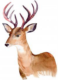 foto of deer  - portrait of a deer - JPG