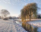 Winter's Morning.