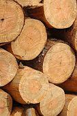 Freshly Cut Lumber