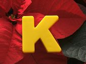K On Poinsettia