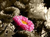 Single Flower In Bouquet
