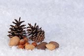 Christmas theme pinecones