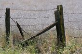 Barbed Wiire Fence