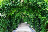 Beautiful Footpath In The Garden. The Walk Way With Camber Colorful Flowers And Trees Background. poster