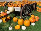 Pumpkins On The Wagon