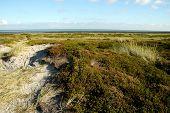 Sylt Landscape2