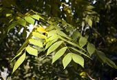 Collection Of Autumn Leaves In Tree Nurseries 4