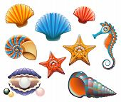 Seashell Set