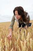 Woman with electronic tablet analyzing wheat ears