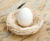 Big egg standing in small straw nest
