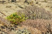 Clouse Up Shot Of Endemic Milkweed And Cactus. Selective Focus. Dry Sandstones Coastline In The Back poster