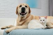 Adorable Dog Looking Into Camera And Cat Together On Sofa Indoors. Friends Forever poster